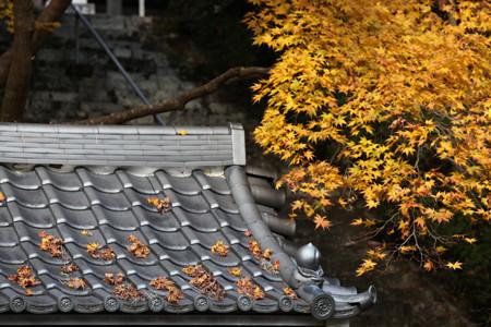 金蔵寺 - 14