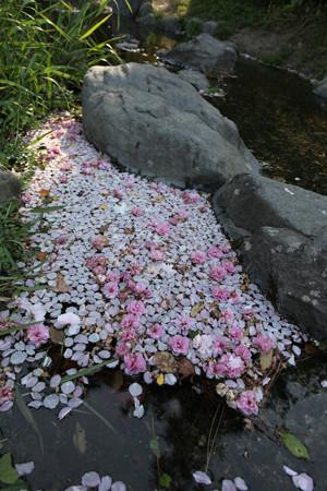 京都御苑 - 04