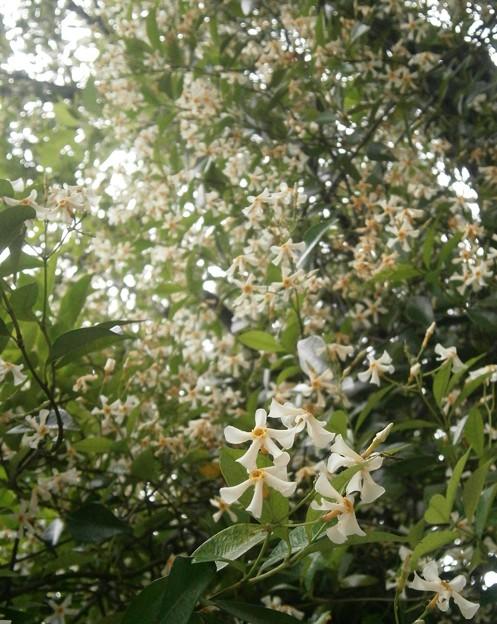 桜の木に・・・