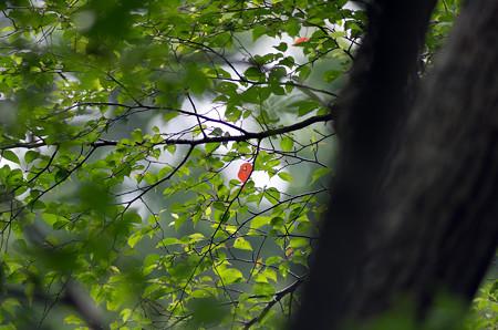 キョロロの森4