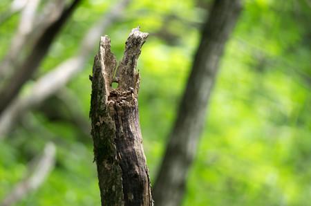 キョロロの森5