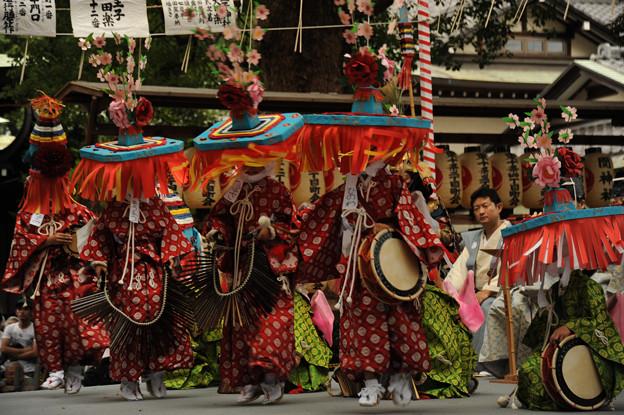 写真: DSC_ojidengaku0057