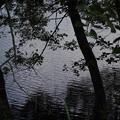 自然保護センターの池