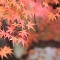 Photos: 岡山後楽園 紅葉