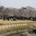 Photos: 御庭の花見