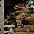 大阪鵲森宮狛犬阿形