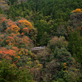 Photos: 南海高野線極楽橋付近-03