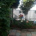 写真: 西側花壇
