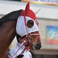 Photos: Satono Principal 01