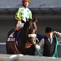 Photos: Nihonpiro Ours 02
