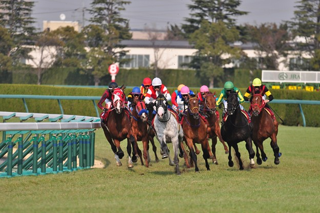 阪神大賞典4コーナー 01