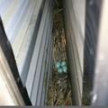写真: 戸袋のhouse卵4つ