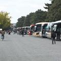 写真: バスだらけ