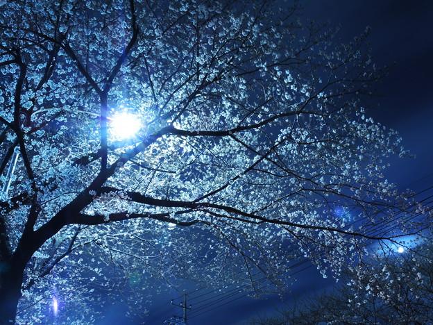 夜中の開花
