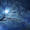 Photos: 夜中の開花