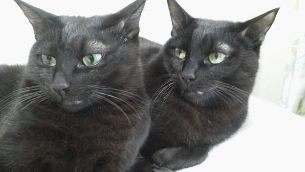 双子…(二卵性猫)