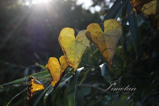 晩秋の光り