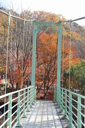 丹沢湖紅葉3-6