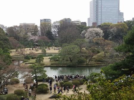 六義園桜1