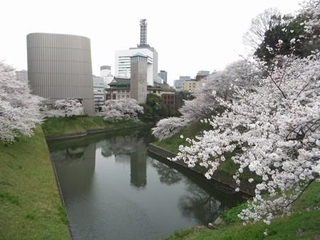 千鳥ケ淵桜6