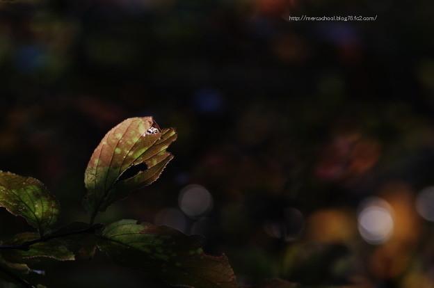 何かの木の葉っぱです(^_^)