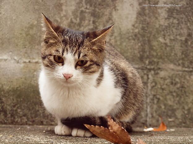 子ネコと落ち葉♪