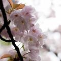 Photos: flower-9081