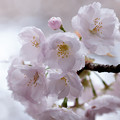 Photos: flower-9082