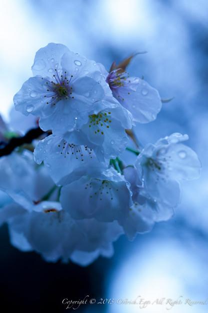 Photos: flower-9088