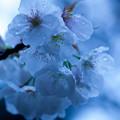 写真: flower-9088