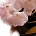 Photos: flower-9091