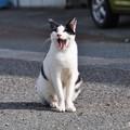 Photos: 漁港の猫2