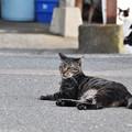 Photos: 漁港の猫3