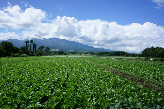 高原野菜と八ヶ岳