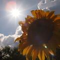 Photos: 夏!!