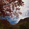 Photos: ナナカマドと焼岳
