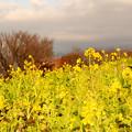 Photos: 春が来た??