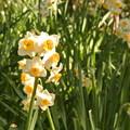 写真: 春うらら。