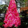 街路にピンクのツリー(1)