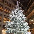 Photos: KITTE クリスマスツリー
