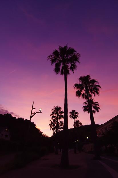 南国の黄昏