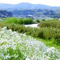 花咲く川辺