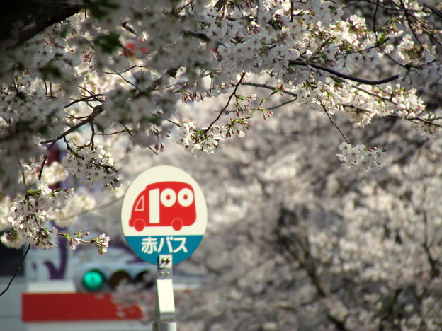 Photos: 桜通りのバス停