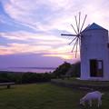 風のアトリエ~風車とヤギ