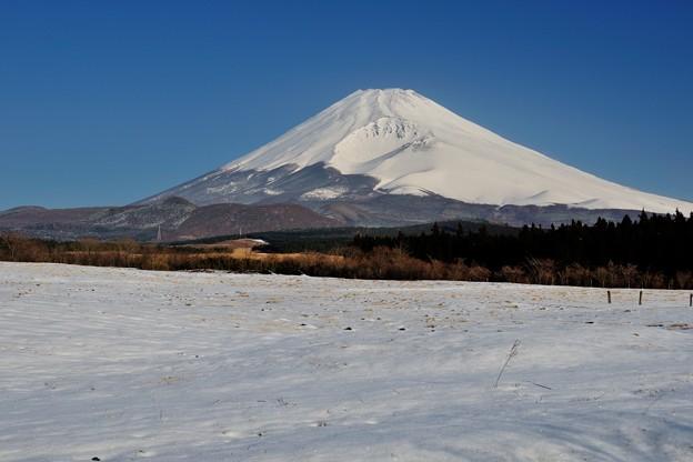 裾野市からの富士山 その1