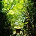 Photos: 大徳寺高桐院
