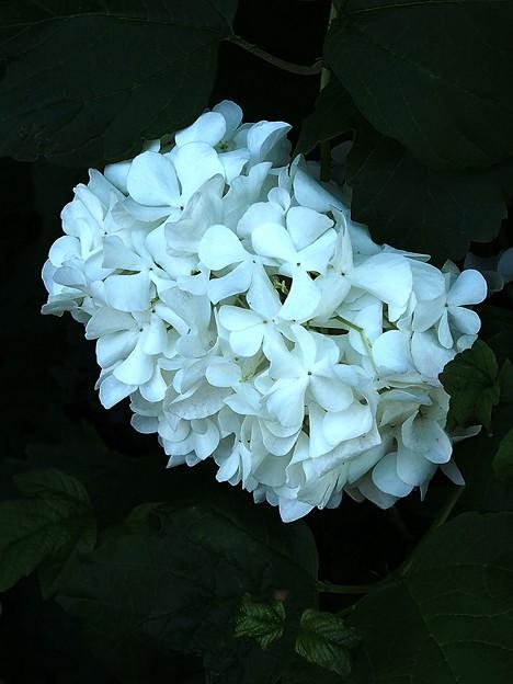 花 in USJ