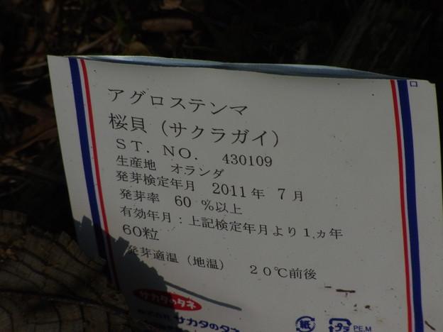1010 アグロステンマ サクラガイ 名札 003 ?
