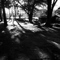 Photos: 冬の日