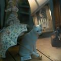 Photos: 白い猫